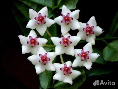 Распространенные комнатные цветы с