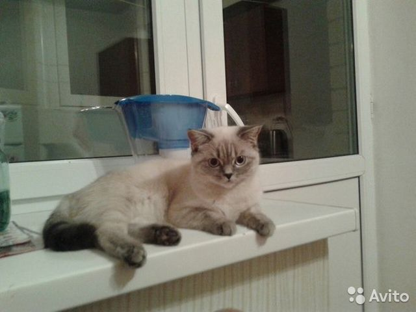 В зоомагазинах есть порошковый заменитель кошачьего молока, или можно обычным молоком кормить с бутылочки