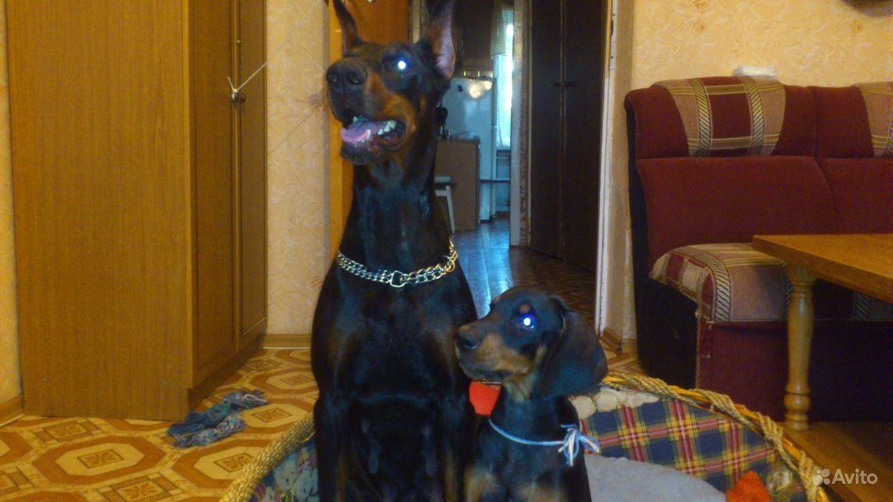 Собаки в Гуково, продажа с фото, цены | купить щенка и