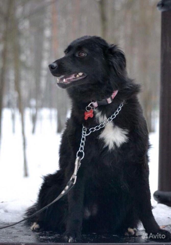 Собака в добрые руки в Москве - фотография № 4