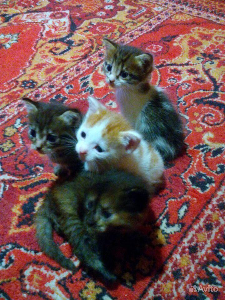 Разноцветные шалуны-котята