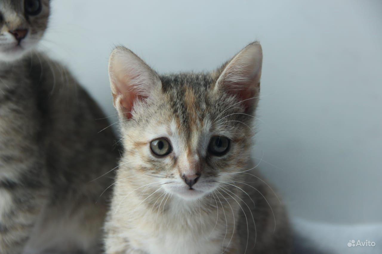 Котёнок - фотография № 2