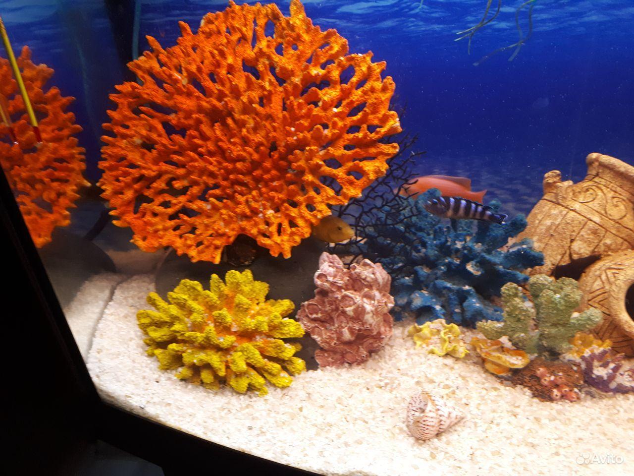 Кораллы, гроты, камни для аквариума купить на Зозу.ру - фотография № 10