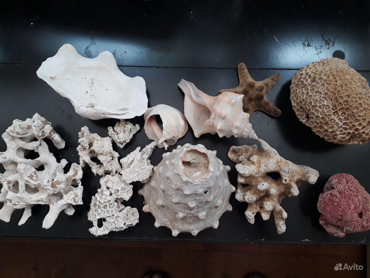 Коралл и ракушки купить на Зозу.ру - фотография № 1