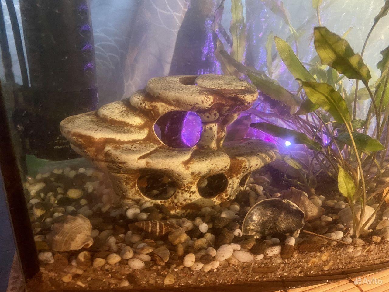 Аквариум с рыбками купить на Зозу.ру - фотография № 3