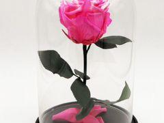 Роза к торжеству