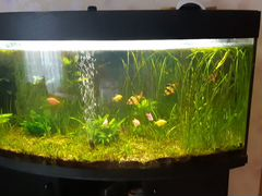 Авариум 200 л с рыбками