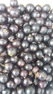 Ягоды черной смородины объявление продам