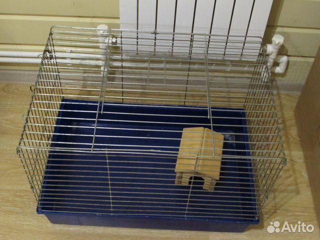 клиники, клетка доя крысы на авито в спб можно открыть