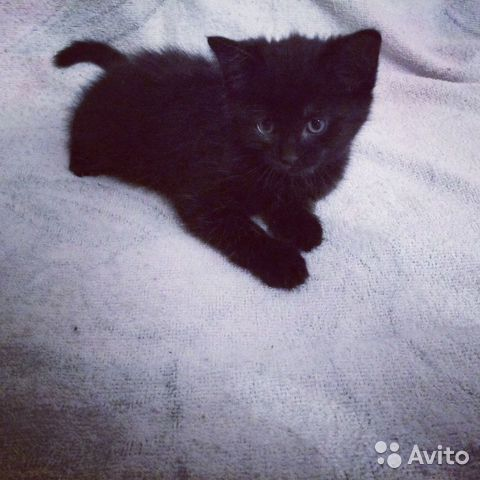 Söta kattungar i goda händer)