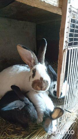 Кролик 89040816416 купить 1