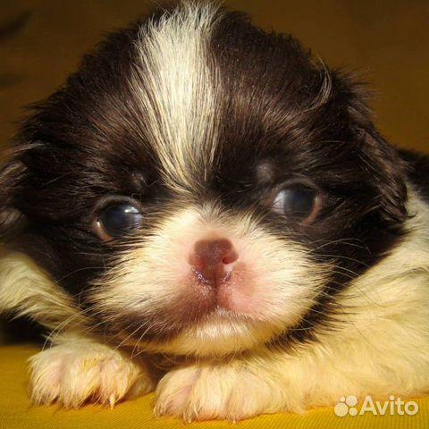Puppies 89040704100 buy 6