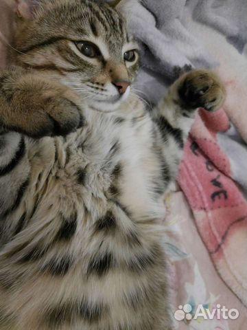 Кот ищет вязку