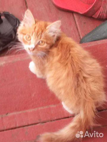 Кошка  89990868266 купить 1