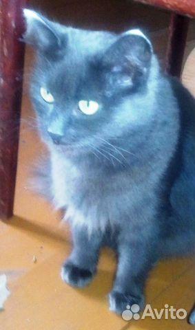 Мама-кошка молодая и сын котенок сибирские  89195513765 купить 3