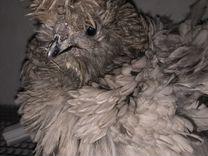 Яйцо курочек Фризли (Frizzle от шёлка)