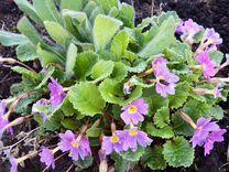 Многолетние растения для сада