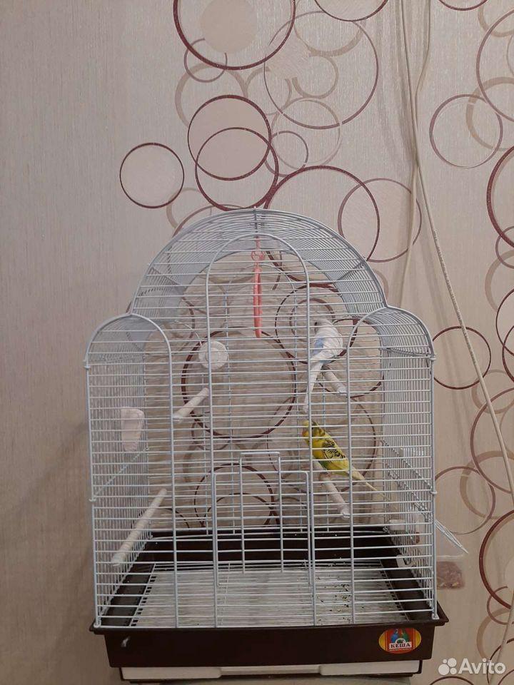 Волнистые попугайчики с клеткой  89272656623 купить 1