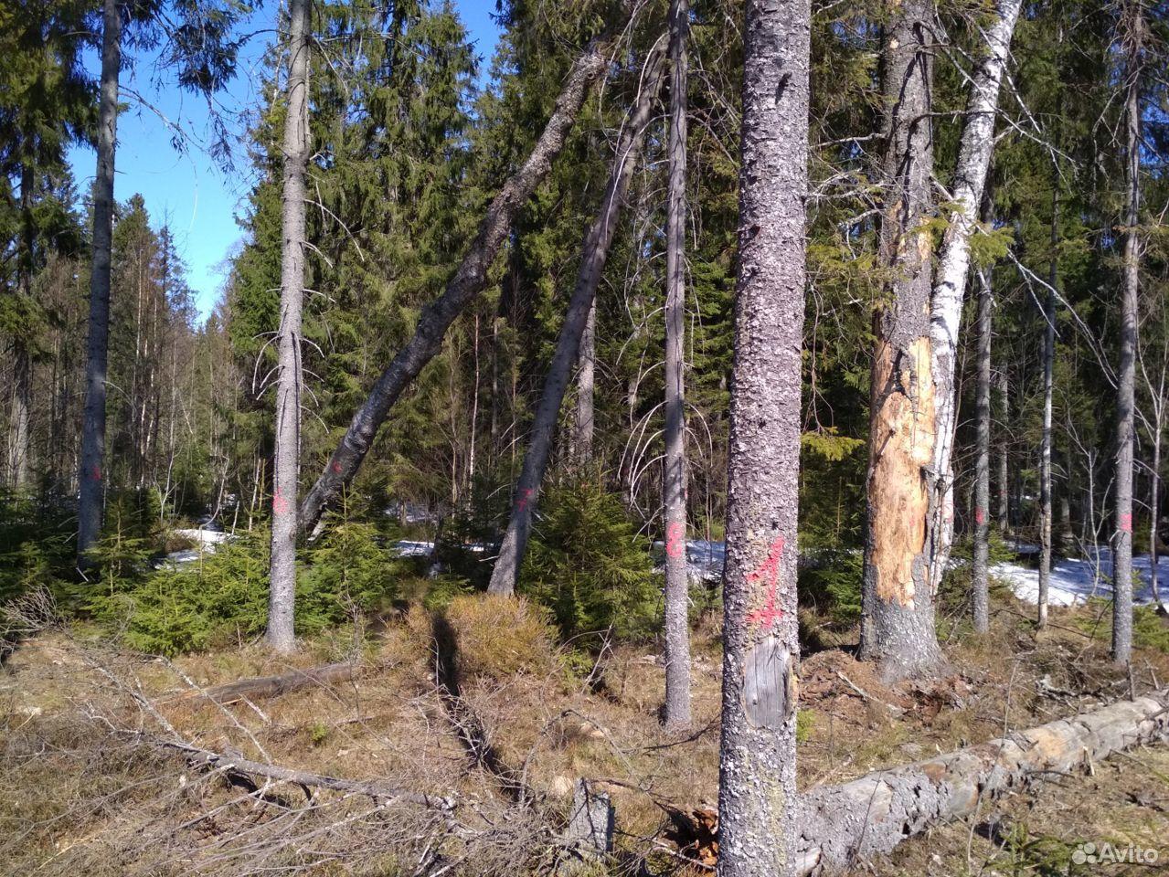 Обменяю приказ на 20куб леса на машину дров  89125963866 купить 1