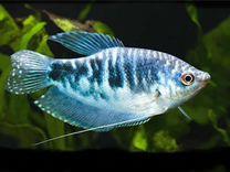 Питомник мирных аквариумных рыбок