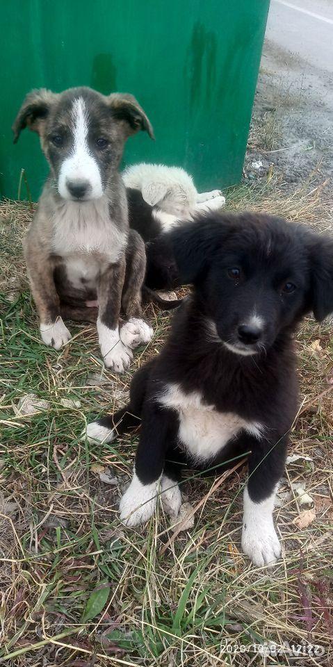 Прекрасные щенки  89308551668 купить 1