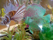 Скат силиконовый для аквариума, новый