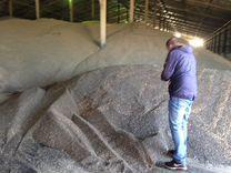 Экспорт зерновых культур