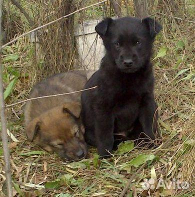 Красивые щенки ищут любящие семьи  89135639765 купить 9