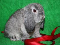 Зайки- крольчата