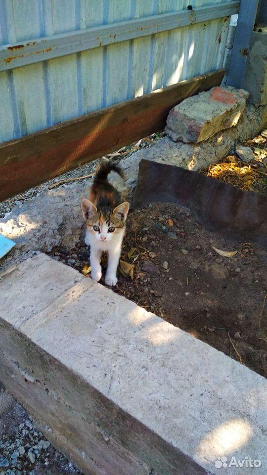 Котята, 5 очаровашек  89173308243 купить 10